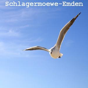 Schlagermoewe-Emden